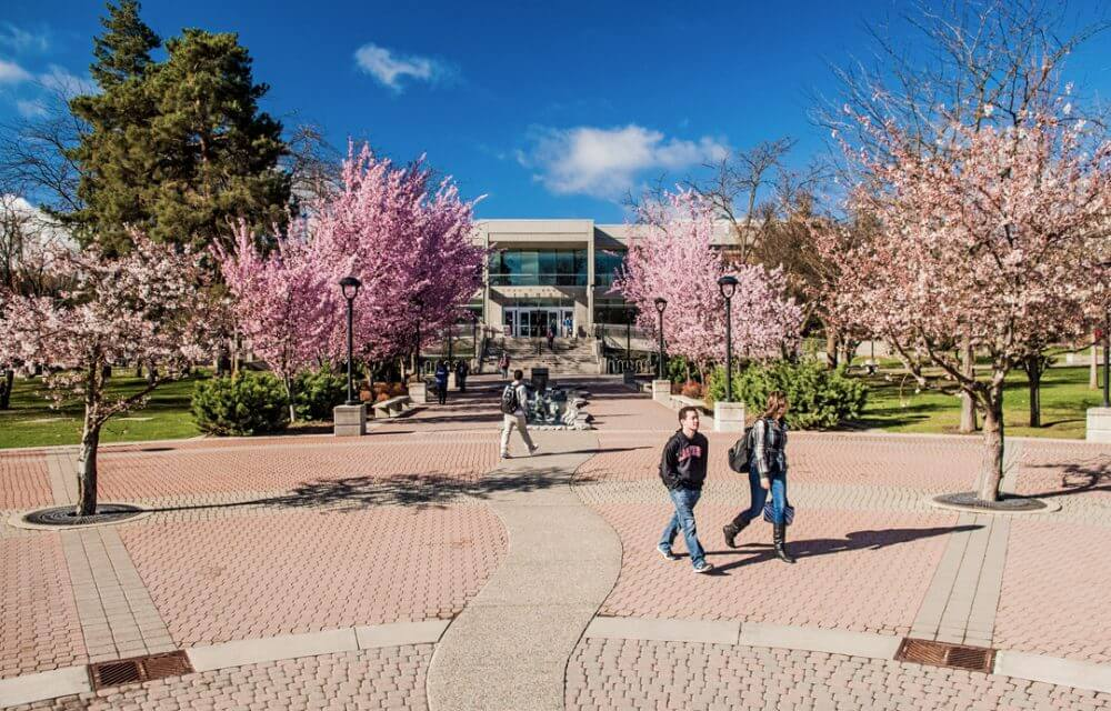 Students walking across campus mall in spring